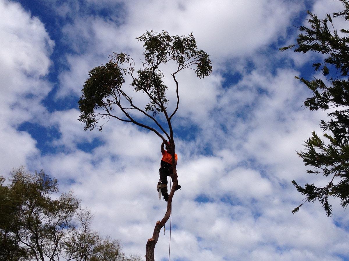 Arborists in a tree