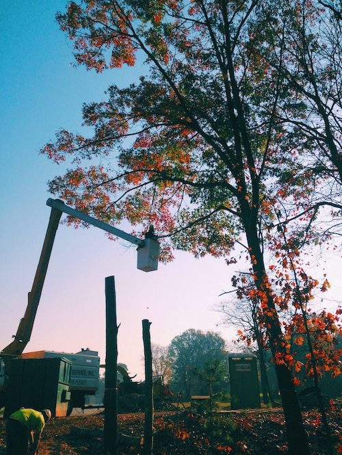 cherry picker tree lopping in perth
