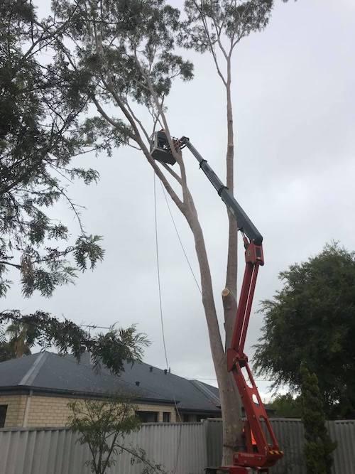 cherry picker tree services in perth