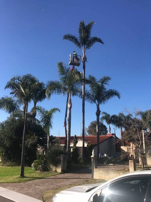 ewp tree pruning in perth